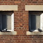 Twindows with a Smidgin of Pigeon by Yampimon