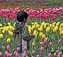TipToe Through The Tulips by Maria Dryfhout