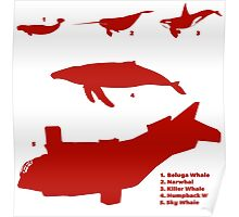 Whale Comparison Chart, TR alternate version (brighter red.) Poster
