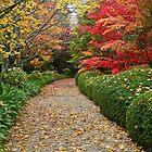 Autumn Colours by Kim Roper