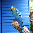 exotic parrot by mbrookes81