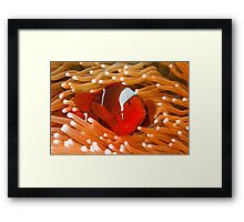Red-Hot Framed Print