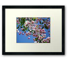 Duffs Crab Apple Tree Framed Print