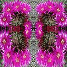 Butterfly of Circled Cactus by KazM