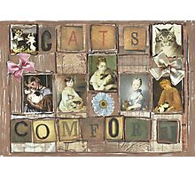 Cats Comfort Photographic Print