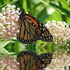 Monarch by Rick  Friedle