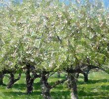 Apple Tree Orchard by Kathleen Struckle