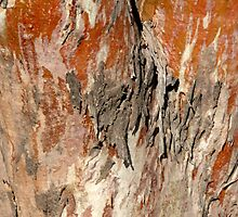 Real Red Gum by JulieMahony