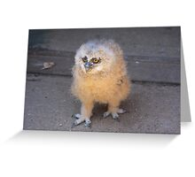 Baby Owl 3 ( one of four ) Greeting Card