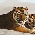 Tigers by Lauren Reeser