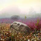 Moon Rock  by Yuri Lev