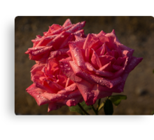 From My Mother's Garden - Three Fabulous Old Fashioned Sweetheart Roses Canvas Print