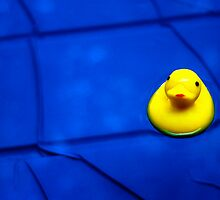 Rubber ducky by Daniel Sorine