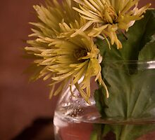 Yellow Chrysanthemums by VioDeSign
