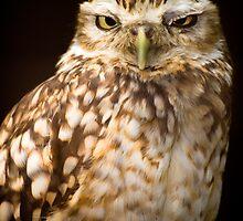 burrowing owl portrait by gashwen