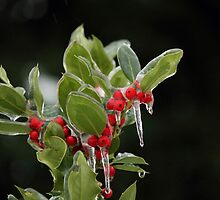 Holly on Ice by Tracy Friesen