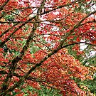 Blazing Tree by carolssecrets