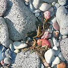 Rocks and Seaweed by Roz McQuillan