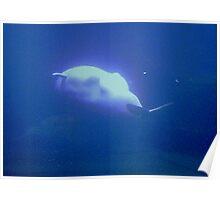 Beluga 2 Poster