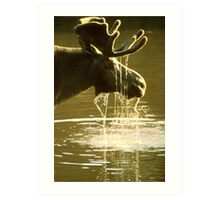 Moose Dipping His Head Into Water Art Print