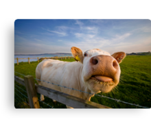 Cheeky Cow Canvas Print