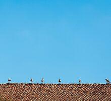 Bird summer school by atomov