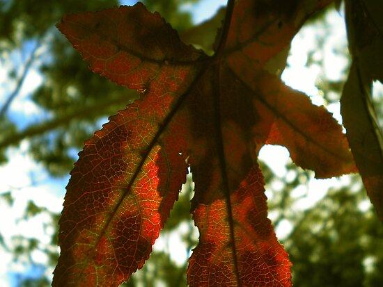 Autumn's Paradox by Jennifer Ellison