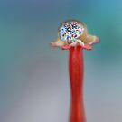 Butterflies by Basia McAuley