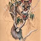 Brushtail Possum by Norah Jones