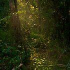 Forest by dydydada