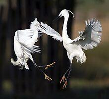 Fighting Little Egrets by Neil Bygrave (NATURELENS)