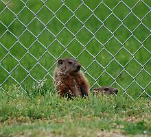 Baseball Field Critters by Jim Caldwell