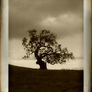 Lone Oak by Leah Highland