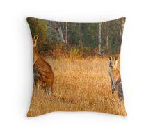 Kangaroos - Kosciusko National Park Throw Pillow