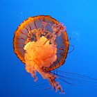 Jelly FIsh in the Blue by Christian Eccleston