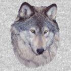Shy Boy by timbrewolf
