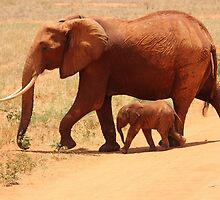 African Elephant Family by tshirtdesign