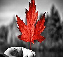 Canada   by erogersss