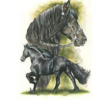 Friesian Photographic Print