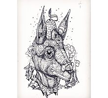 Fox Illustration  Photographic Print
