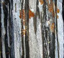 Tree Spirits by Kathie Nichols