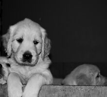 puppies... by Charlistar