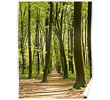Micheldever Woods in Hampshire Poster