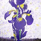 Iris by Susie J