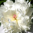 Peony by rebecca smith