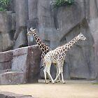 The Two Headed Giraffe by AngryGoldfish