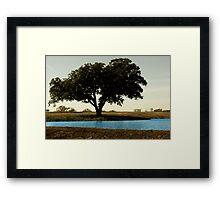 Tree by Pond Framed Print