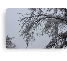 Lacey Branch Canvas Print