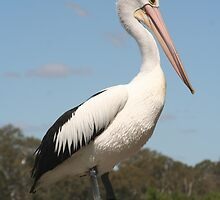 Portrait of a Pelican by Leanne Davis