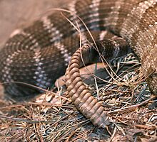 Rattler by Debbie Sickler